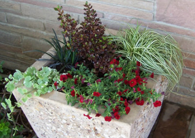 Ripon, CA - Sustainable Landscape Garden Consulting Container Plantings