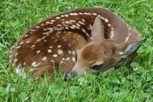 Ecological/Sustainable - Landscaping - Wildlife - Gardening