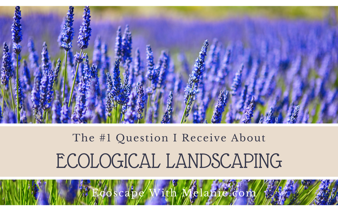 The #1 Question I Receive About Ecological Landscaping