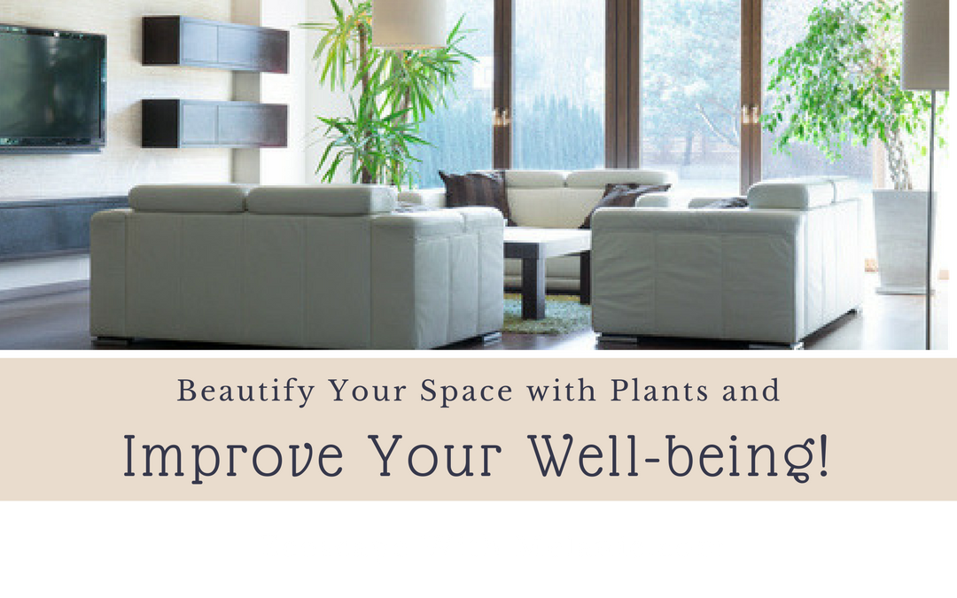 Beautify Your Space with Plants and Improve Your Well-being!